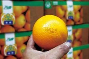 农产品如何做好商标品牌文章?