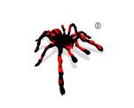 蜘蛛图形商标转让